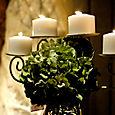 Hydrangea candleabra