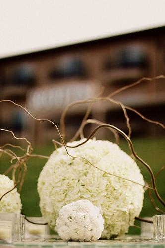 White carn balls