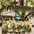 Peacock  chandelier at La Rivage Hotel Sacramento