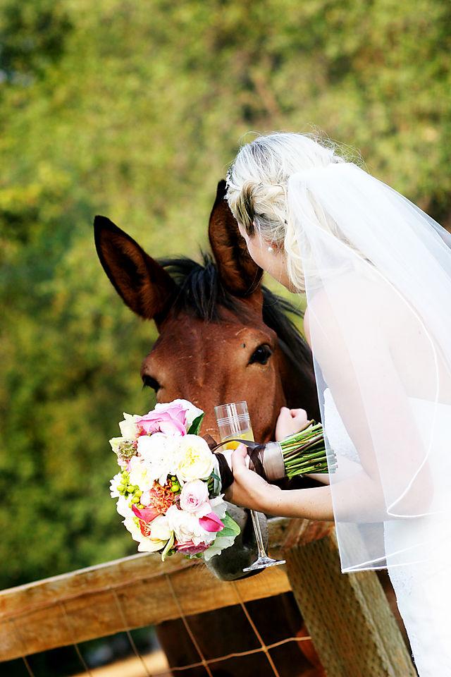 Bride & horse!